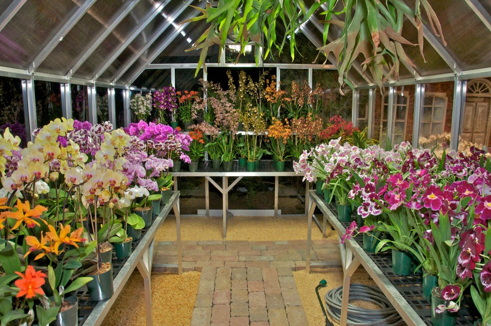 greenhouse-interior