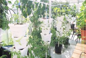 vertical-hydroponics
